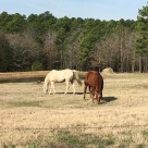 Horses at Fire Fly Hollow
